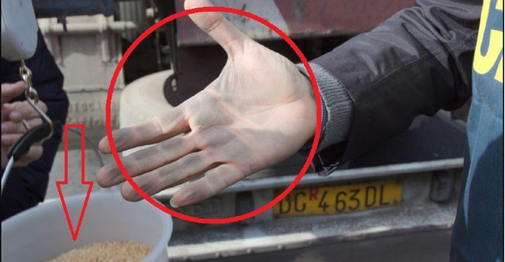grano estero tossico aflatossine