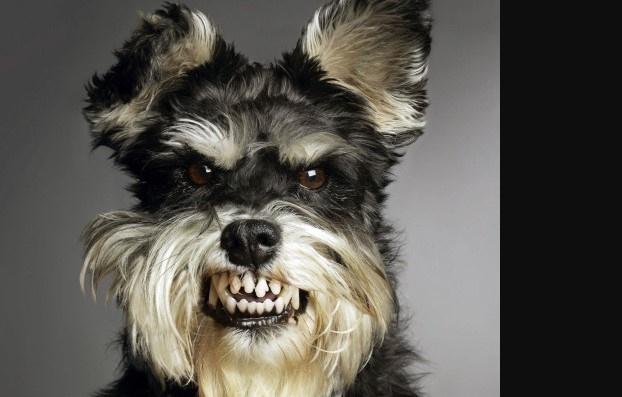 I cani percepiscono le cattive persone prima dell' essere umano