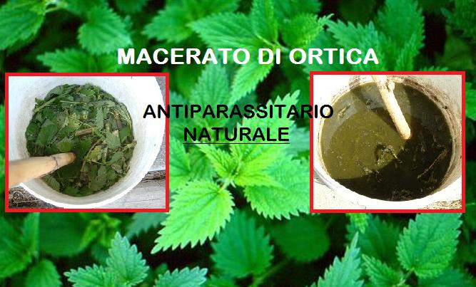 Il Macerato di Ortica come efficace antiparassitario. Semplice e Naturale! Scopri di più