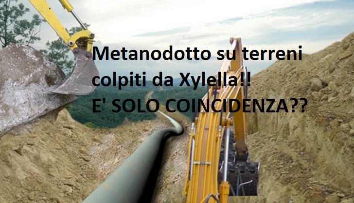 Coincidenza o Complotto? Il Metanodotto SNAM passerà proprio dai focolai Xylella! VIDEO