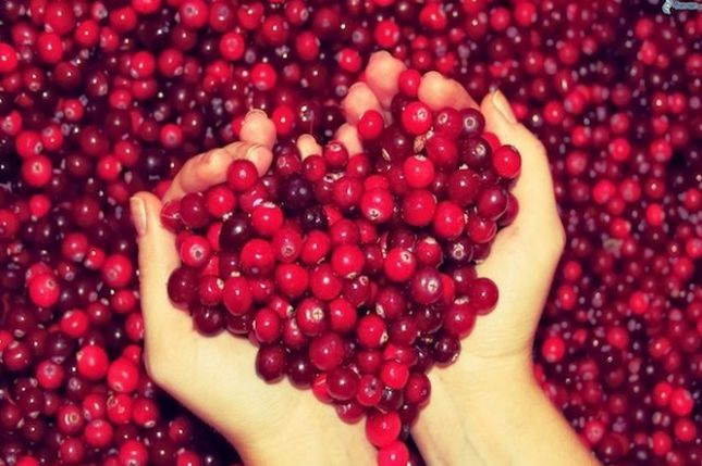 Mirtillo. Proprietà e i benefici di un frutto piccolo ma eccezionalmente salutare!