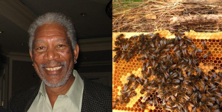 Morgan Freeman trasforma il suo Ranch di 124 acri in un santuario di api per salvare il pianeta