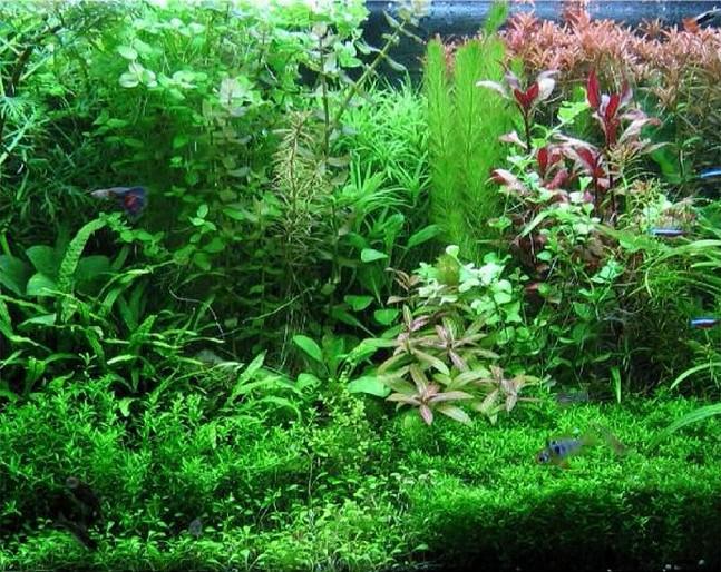 Non riuscite neppure ad immaginare cosa sono in grado di fare le piante!Scopritelo...