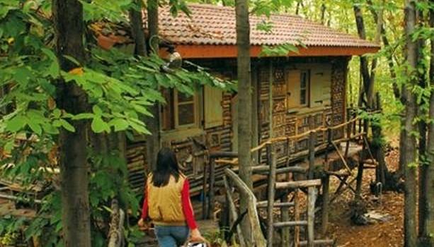 Monti Pelati: il villaggio piemontese di palafitte sugli alberi