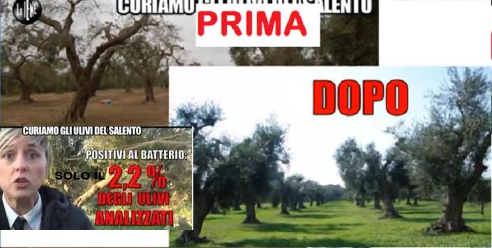 La Xylella è CURABILE ma continua la Farsa della Pandemia...E intanto radono al suolo Ulivi! Foto e VIDEO