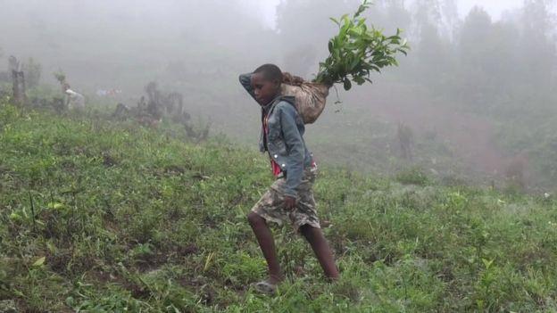 Africa: Bambini sfruttati nei campi della Chiesa Cattolica a 0,30 cent al giorno
