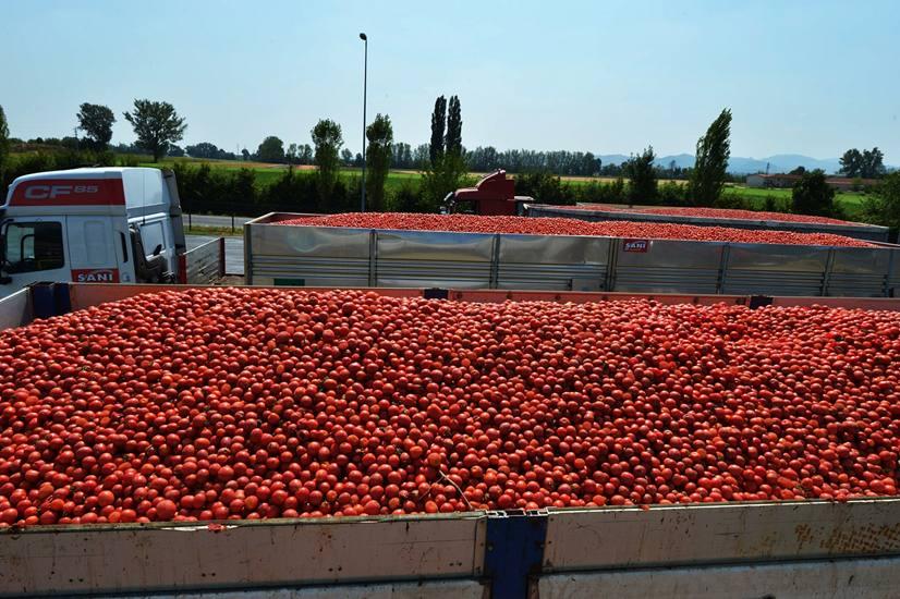 Pomodori marocchini trattati con ddt, svenduti a 60cent al Kg,e agricoltori siciliani che falliscono