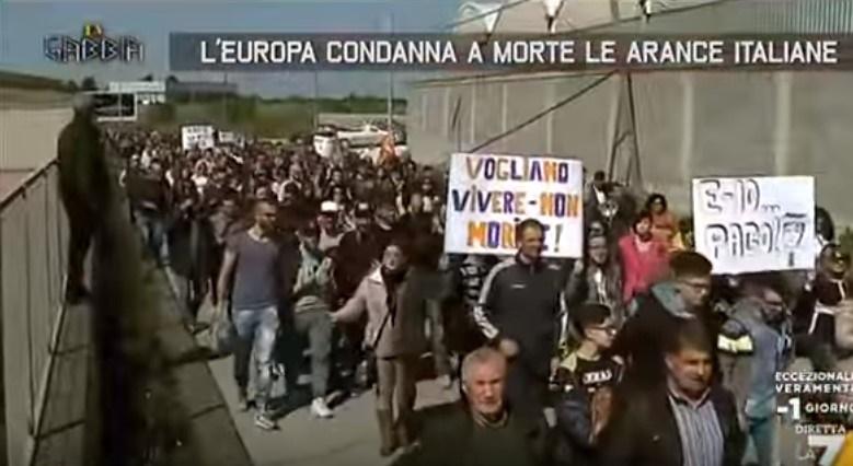 """La protesta degli agricoltori siciliani:""""Ecco come l'Europa condanna a morte le nostre arance"""".IL VIDEO"""