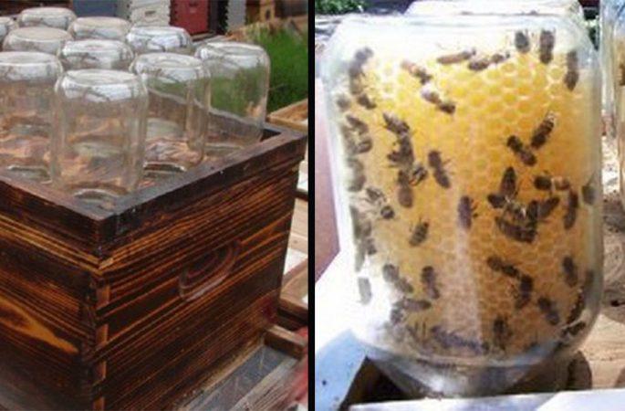 Questo alveare fai da te potrebbe salvare le api del pianeta, e produrre un buon miele