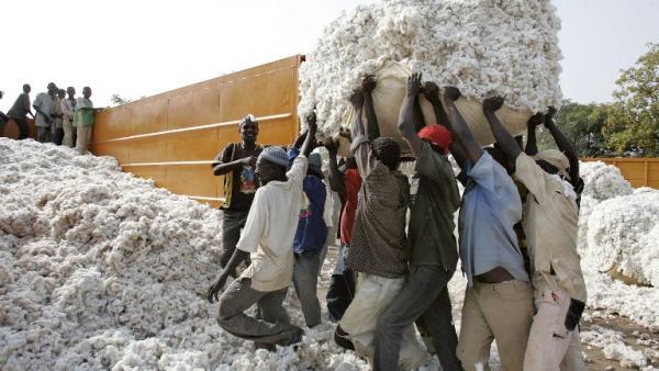 Il Burkina Faso dice basta al cotone ogm e chiede i danni a Monsanto