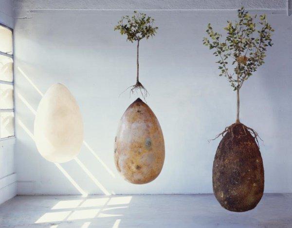 """Capsula mundi:la sepoltura che mantiene""""vivi"""".Come diventare un albero dopo la morte"""