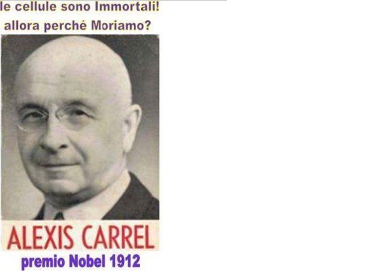 Già nel 1912 si scoprì che le cellule sono immortali,ma moriamo lo stesso