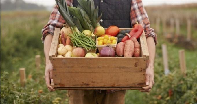 La Danimarca passera' al 100% di agricoltura biologica, libera da pesticidi. E l' Italia?