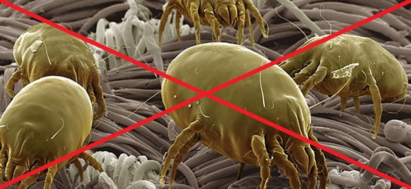 Come eliminare gli acari dal materasso in modo naturale