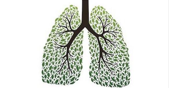 Lo sapevi che puoi ripulire i polmoni ed aiutare il sistema respiratorio con le erbe? Ecco quali