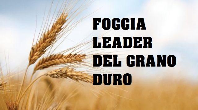 Foggia leader del grano duro in Puglia, azzerati gli sbarchi dal Canada