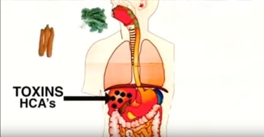 Ciò che mangiamo sembra salutare,ma non è sempre così.Il segreto shock sull'alimentazione umana.VIDEO