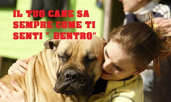 I cani percepiscono il dolore delle persone. Lo afferma uno studio