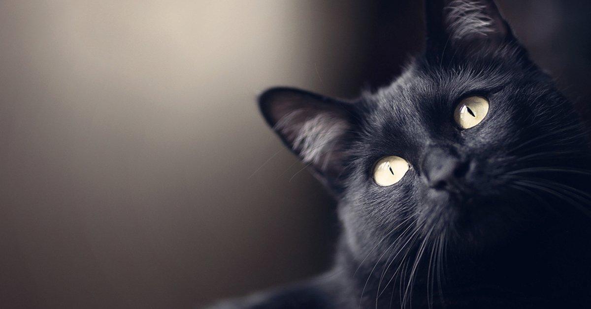 Perchè i gatti proteggono la casa dai fantasmi e dalle energie negative