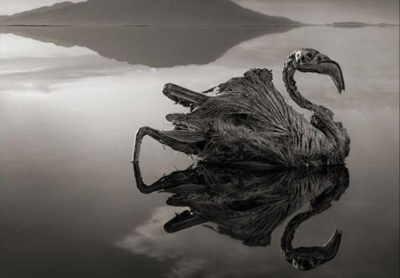 Tanzania: Ecco il Lago Natron ,il più velenoso al mondo,capace di pietrificare gli animali! VIDEO