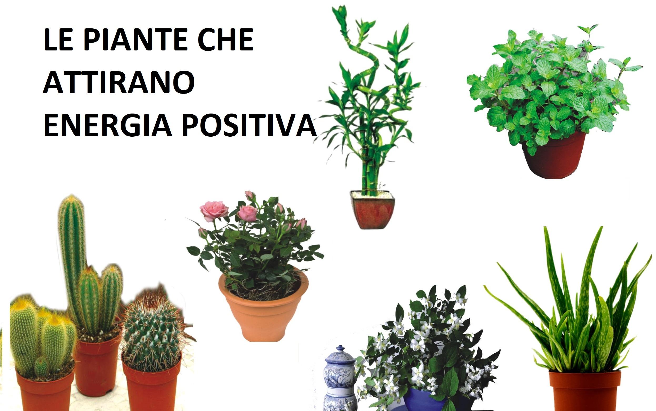 Le piante che attirano energia positiva,amore e fortuna in casa