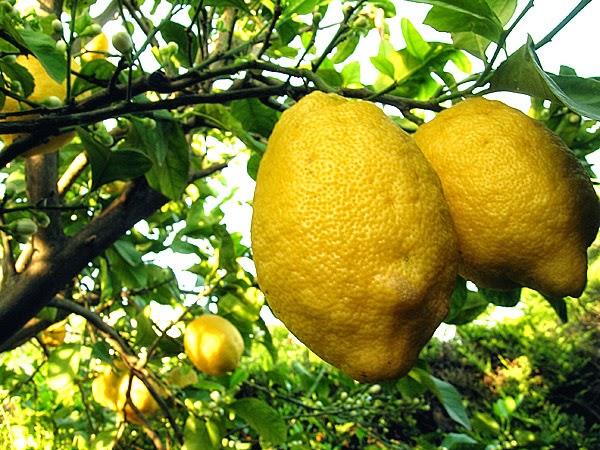 ATTENZIONE ai limoni turchi importati, contengono bifenile.Richiesto lo stop dell' importazione