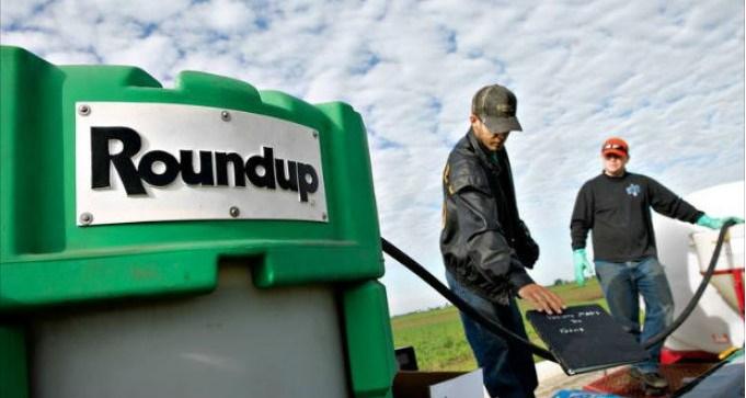 Monsanto in difficoltà: ondata di denunce per i tumori da glifosato contenuto nel loro erbicida.