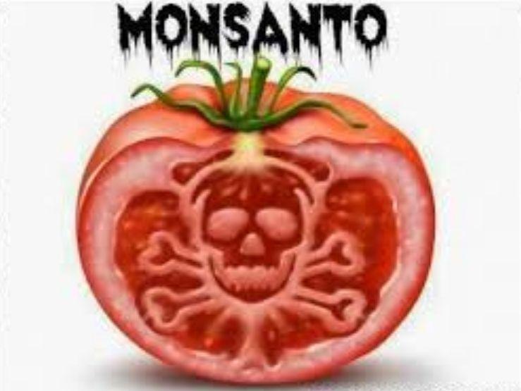 """La Monsanto porta in Sicilia i suoi pomodori ogm,spacciandoli con il """"porta a porta""""!ASSURDO"""