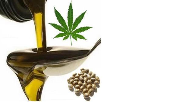 Utilizzare olio di canapa nell'alimentazione apporta degli incredibili benefici per la salute.Ecco quali