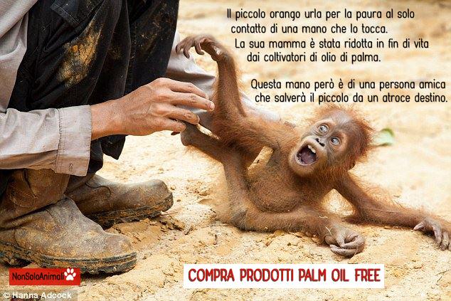 CAMPAGNA PUBBLICITARIA SULL'OLIO DI PALMA SOSTENIBILE: È SOLO UNA PUBBLICITÀ INGANNEVOLE