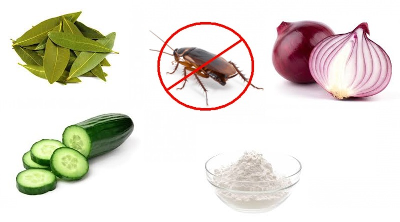 Come allontanare scarafaggi e insetti dalla propria casa in modo naturale