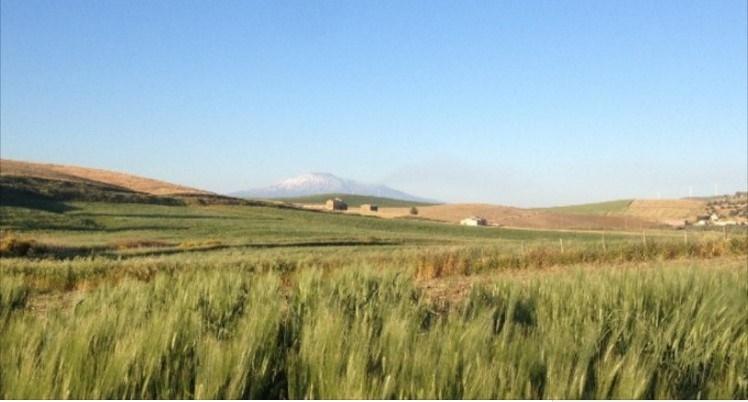 La rivoluzione dei contadini siciliani, 3.000 ettari di grani antichi contro le multinazionali