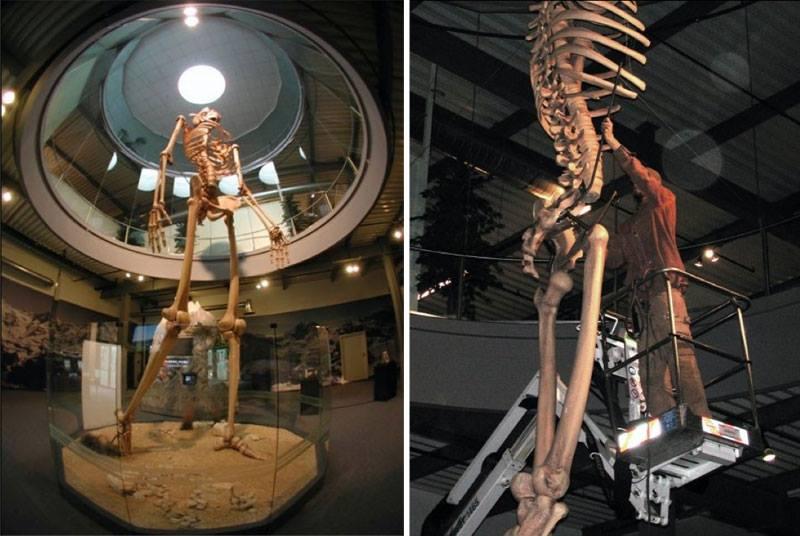 La storia nascosta rivelò scheletri giganti alti 7 metri