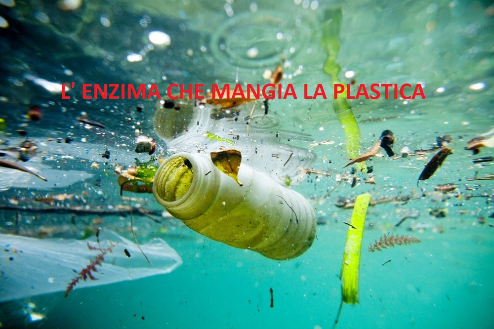 Scoperto PETasi, l'enzima che mangia la plastica.Come salverà l'ambiente