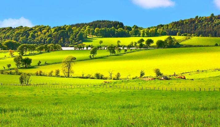 La Scozia non vuole contaminare il suo ambiente: no agli ogm