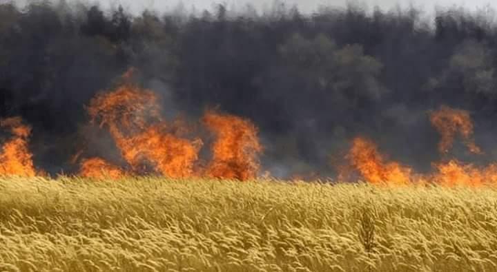OGM: L'Ungheria distrugge tutte le sementi Monsanto e brucia i campi