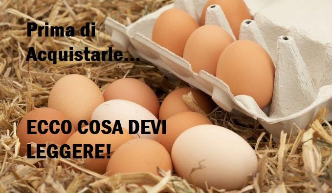 Come riconoscere che tipo di uova si sta acquistando! Ecco cosa leggere e a cosa stare attenti!