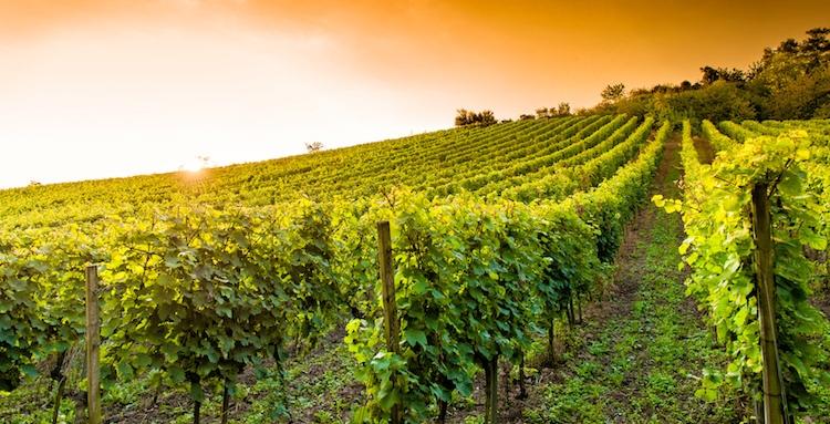 Dopo i nostri formaggi,limoni ecc ora anche i nostri  vini!L'Europa infame che uccide l'agricoltura