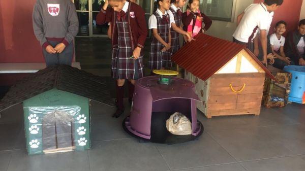 bambini costruiscono casette per i cani di strada - materiali utilizzati