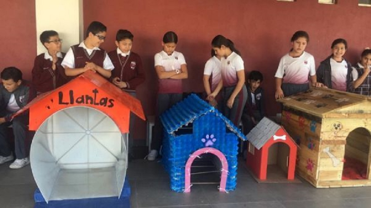 Bambini costruiscono case per i cani di strada usando materiali riciclati