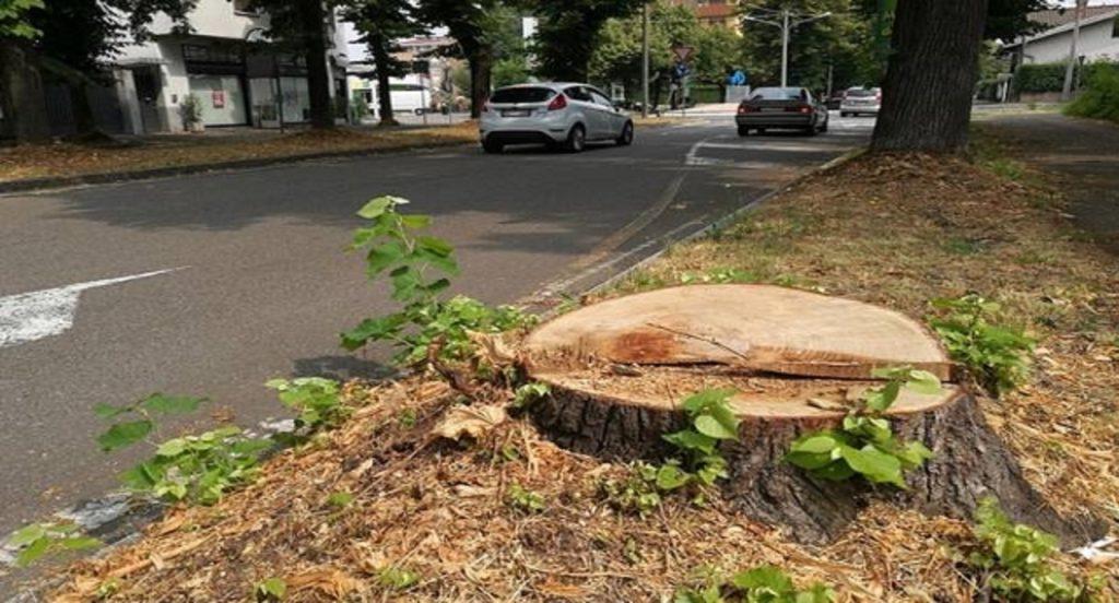 ecatombe di alberi per il 5g