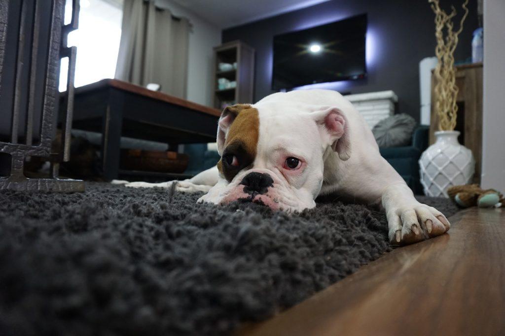 problemi emotivi animale domestico