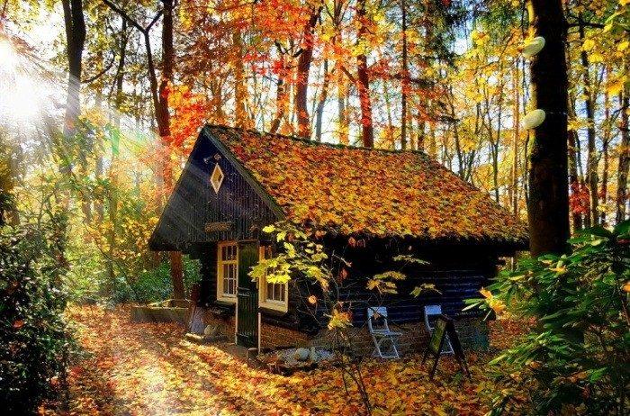 casa nel bosco felicità