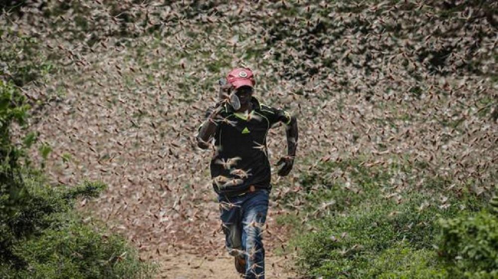 Invasione di locuste in Somalia dovuta ai cambiamenti climatici. Dichiarato lo stato di emergenza