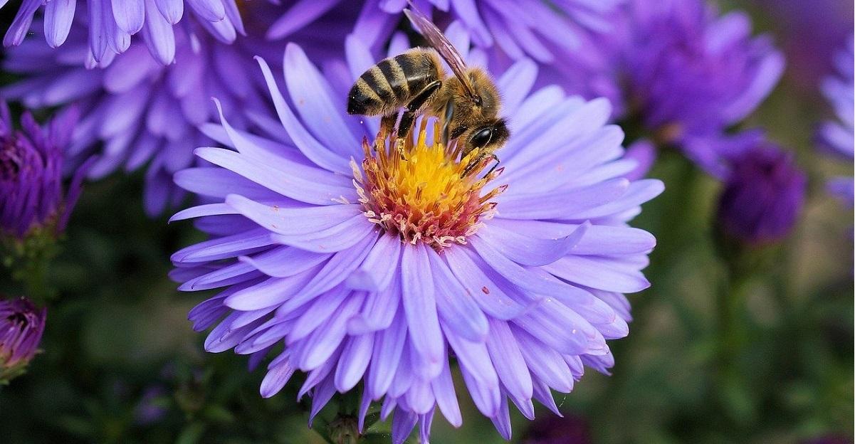 Il blocco per il covid-19 sta salvando le api. Boom di fiori selvatici e boom di api