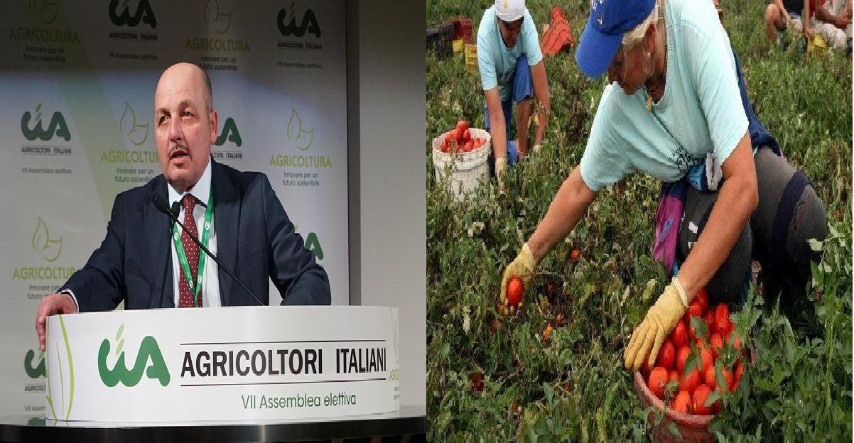 """Presidente agricoltori: """"servono 200mila lavoratori nei campi, o italiani o sanatoria per immigrati"""""""