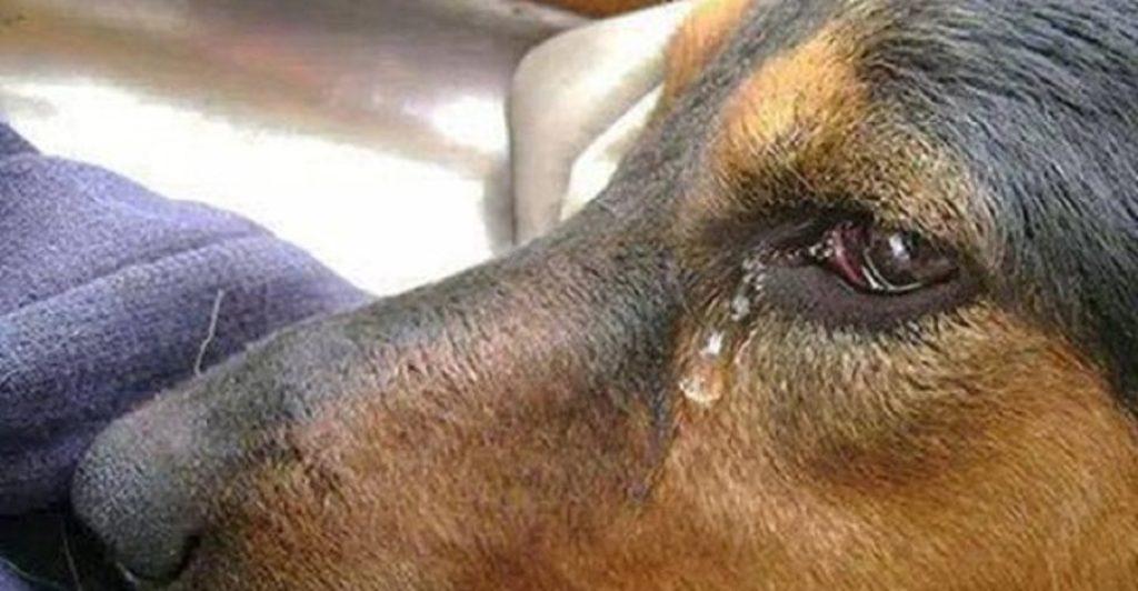 shenzhen vieta carne di cane