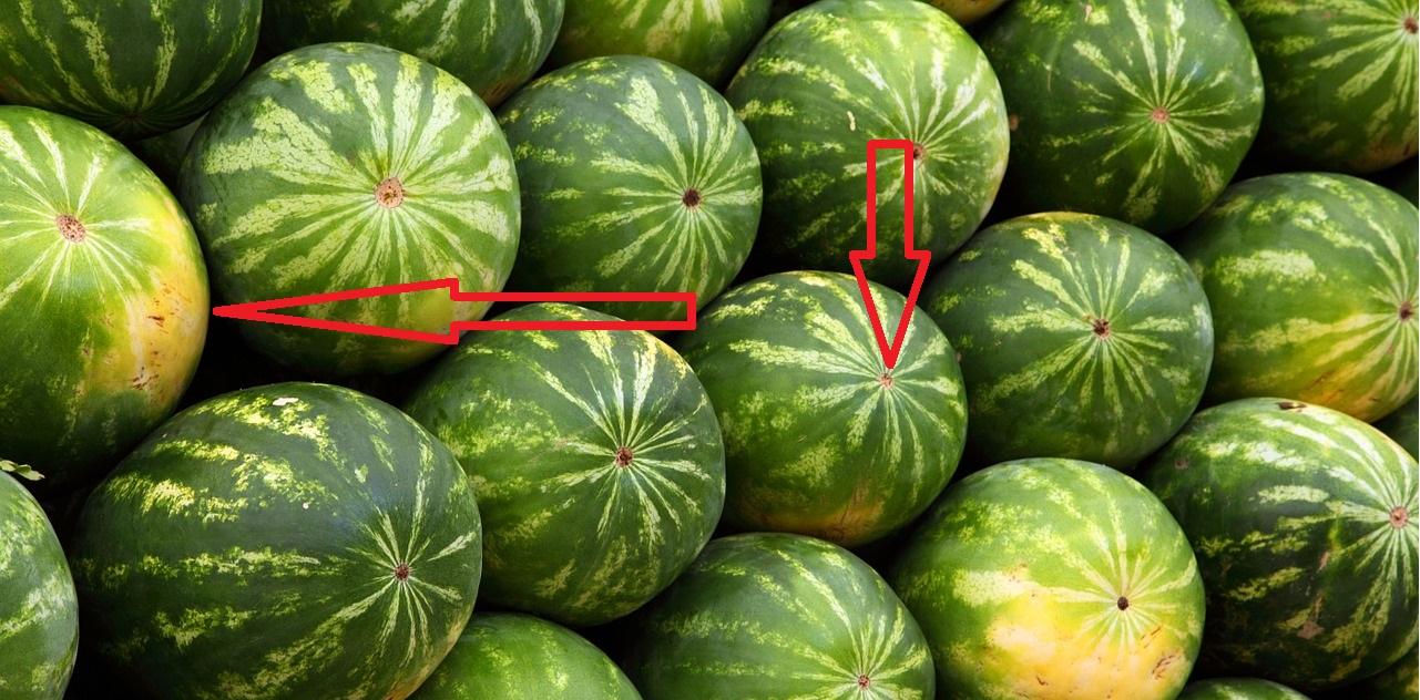 Come capire se stiamo acquistando un'anguria gustosa e di qualità