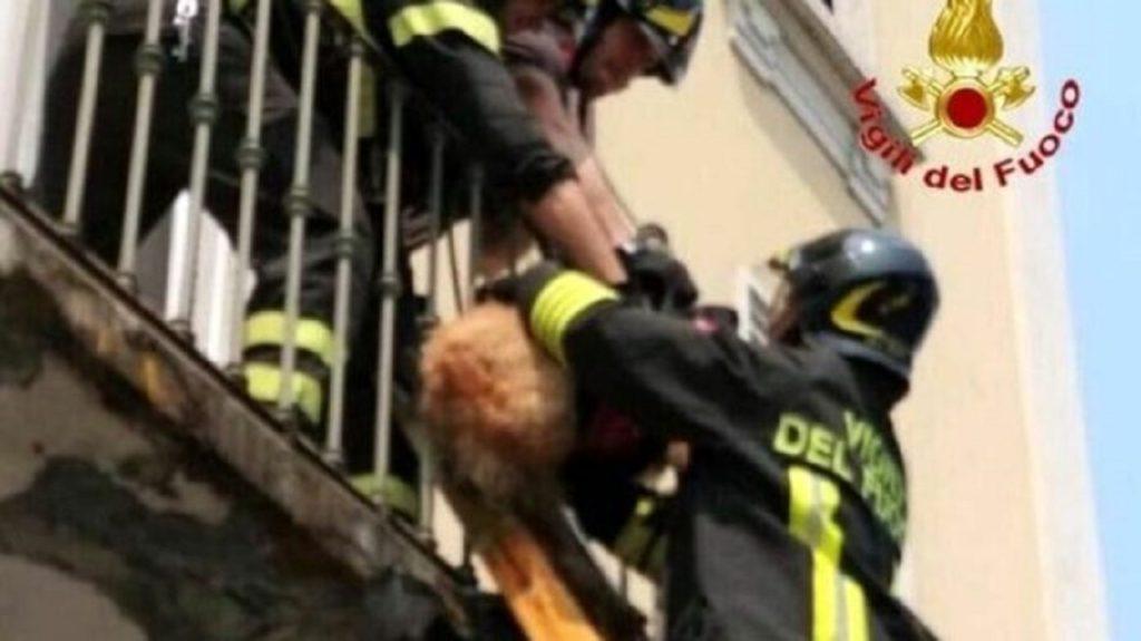 salvataggio cane su balcone caltanissetta vigili del fuoco