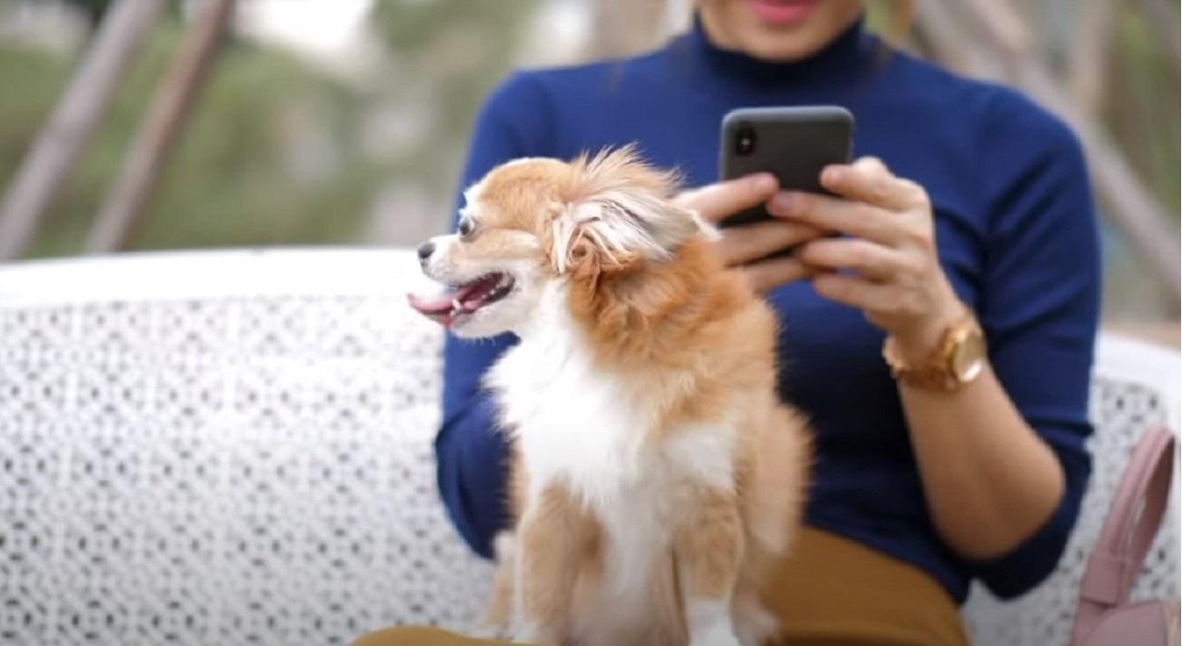 Bonus animali domestici 2021 per coloro che hanno un amico a 4 zampe
